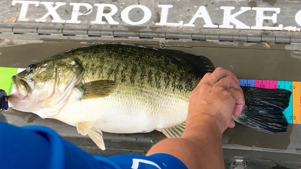 How to Identify All 9 Species of Black Bass - Wired2Fish com