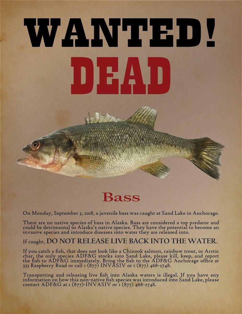 wanted-dead-bass-alaska-flyer.jpg