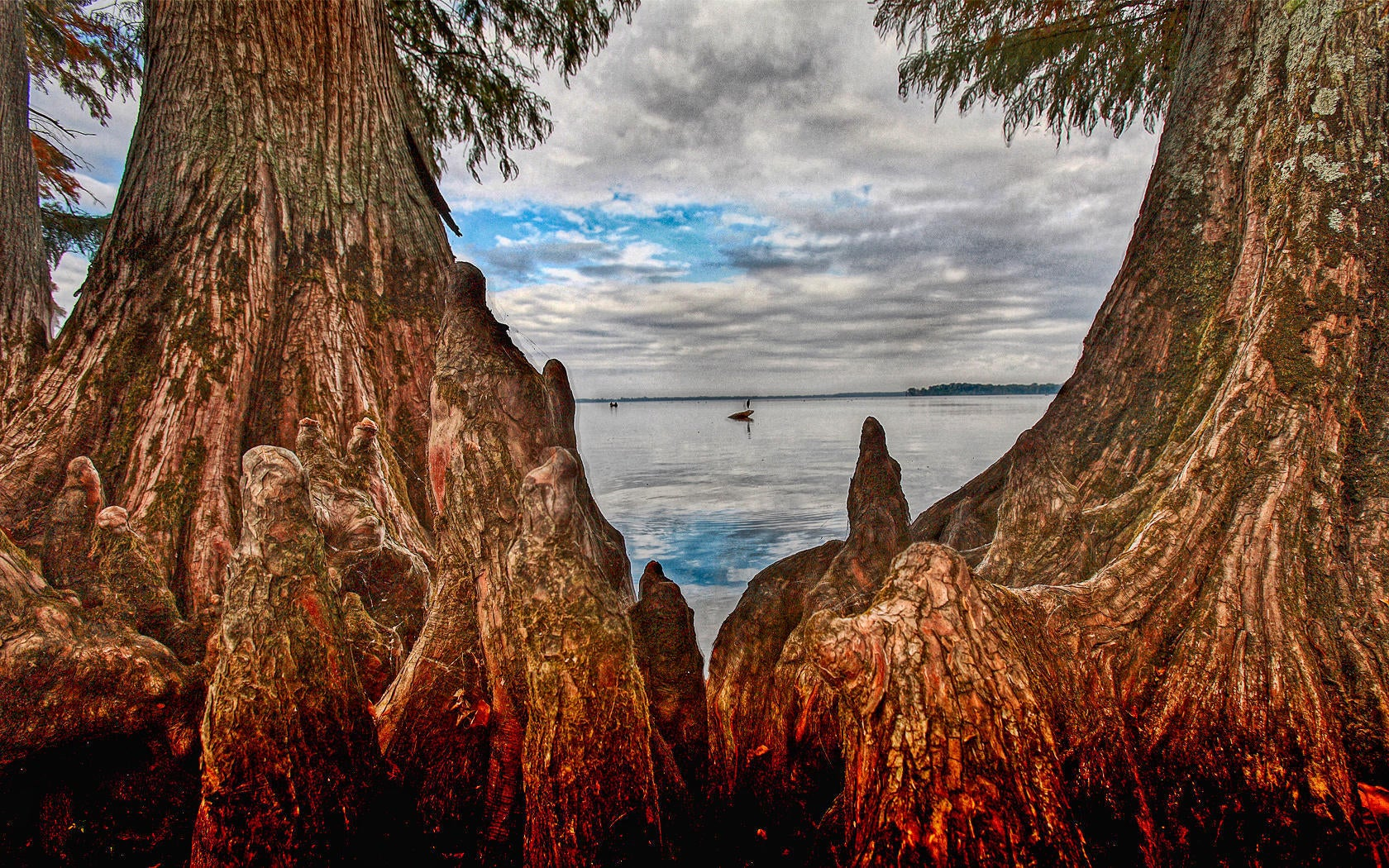 cypress-knees-stumps.jpg