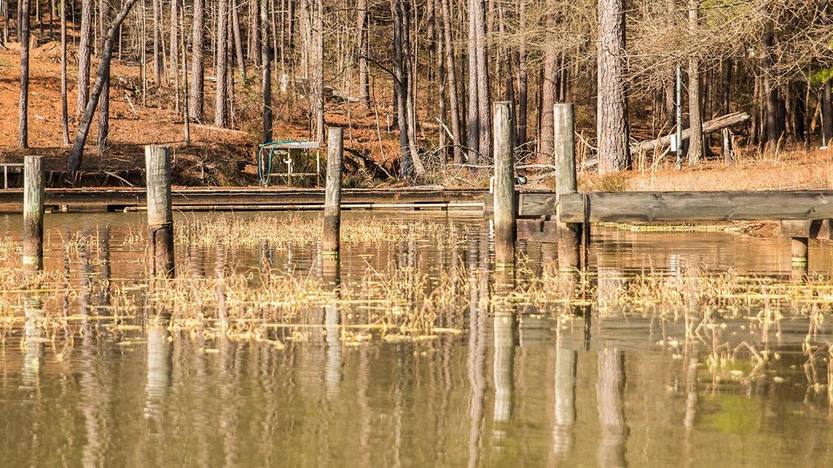 dock-grass.jpg