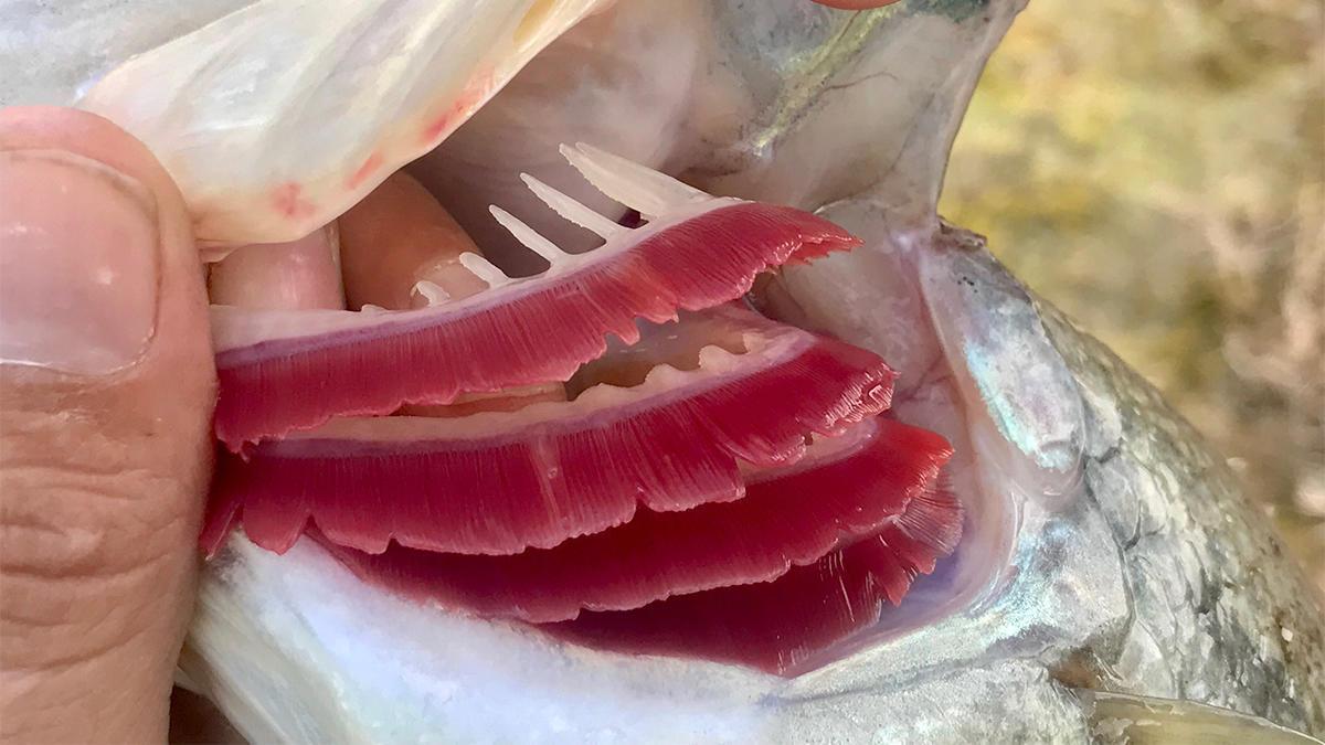 soda-fish.jpg