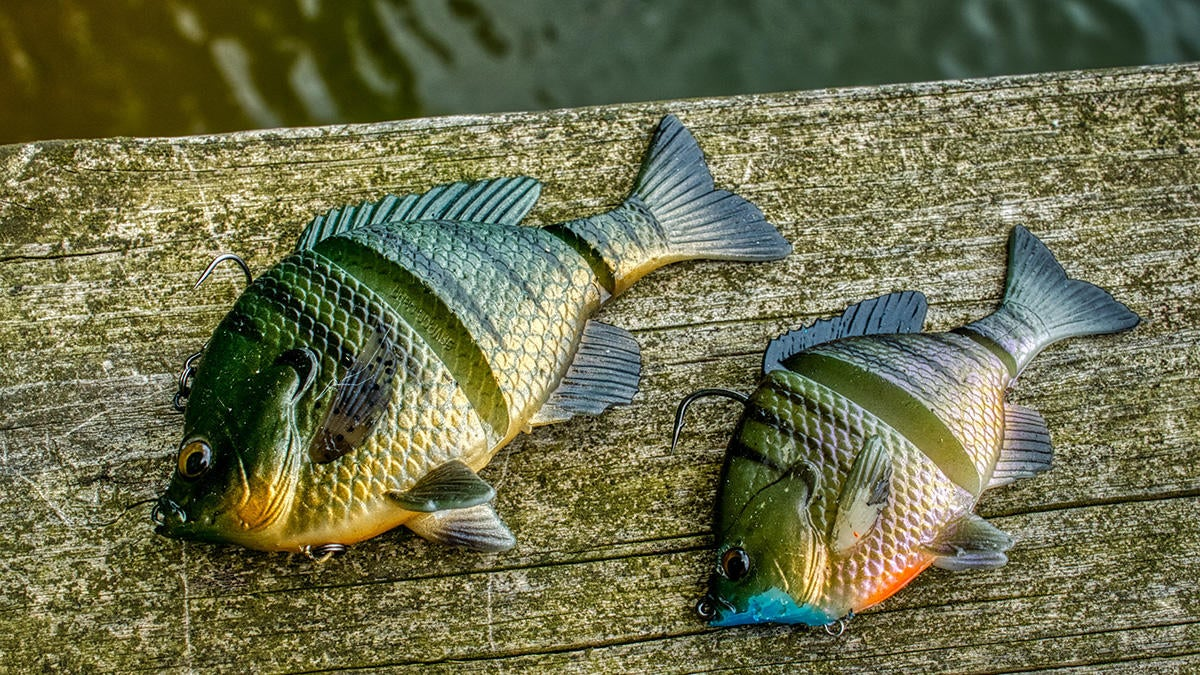 5-inch-and-4-inch-3d-bluegill-1200px.jpg