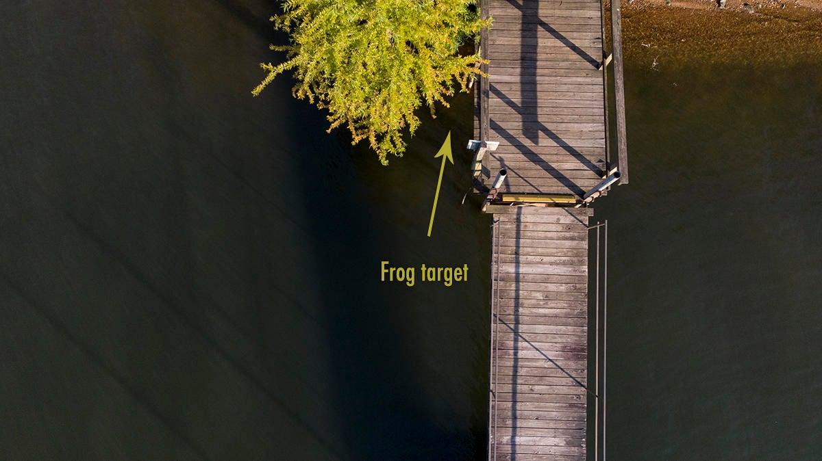 frog-target.jpg