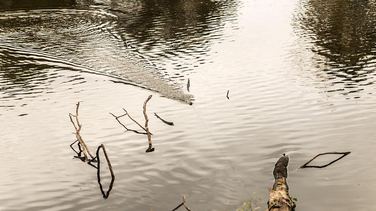 pond-fishing-low-water-6.jpg
