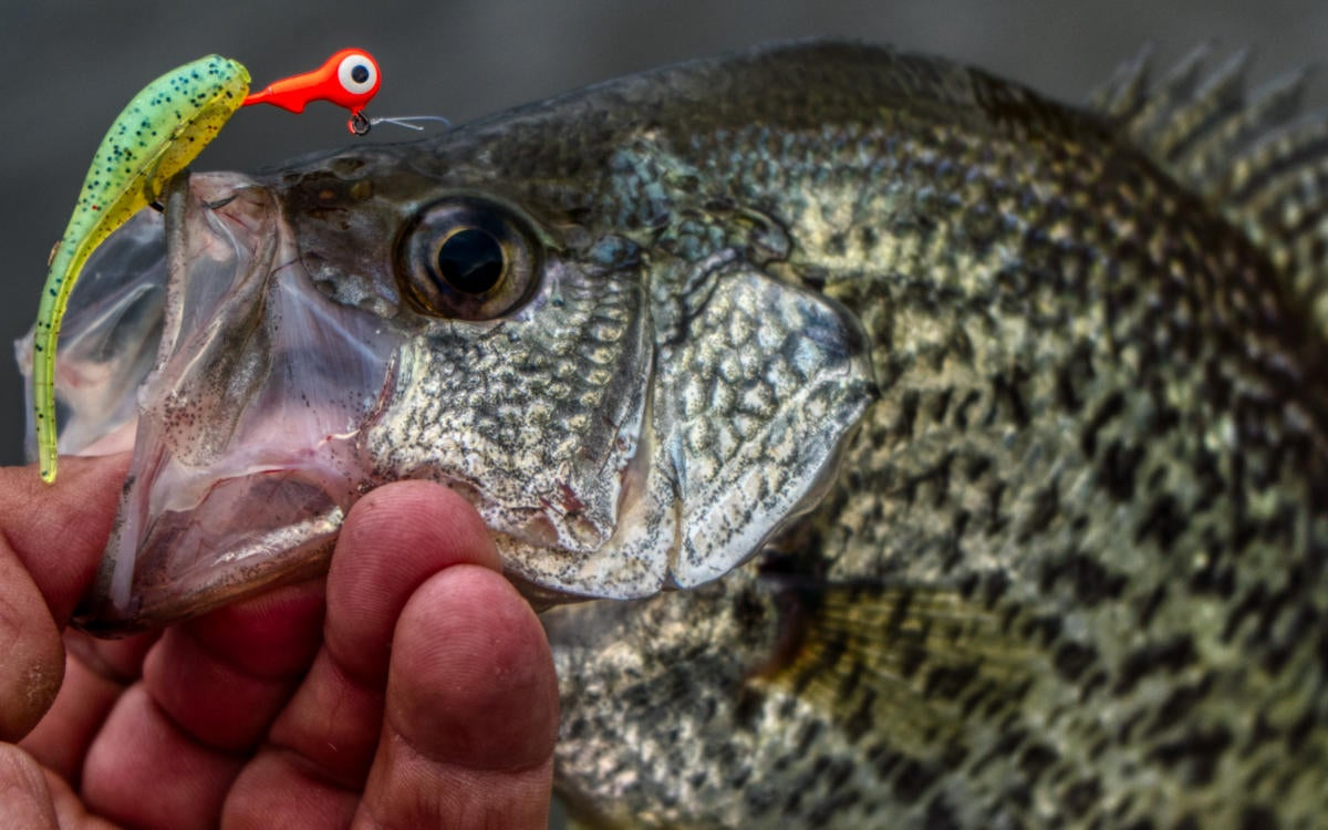 crappie-single-tail.jpg