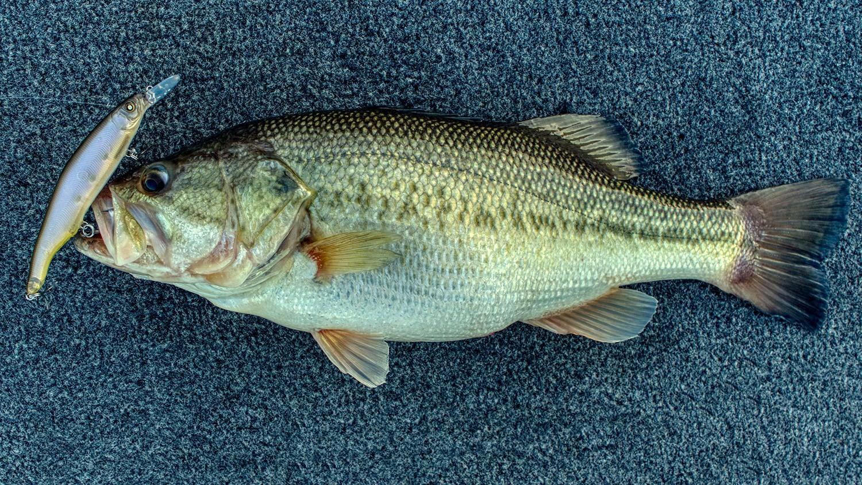 jason-nishine-bass.jpg