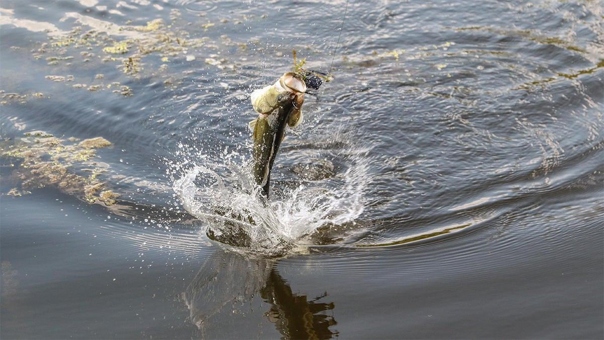 rojas-spro-bronzeye-frog-for-bass-fishing-3.jpg