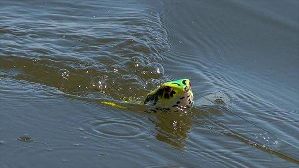 rojas-spro-bronzeye-frog-for-bass-fishing-4.jpg