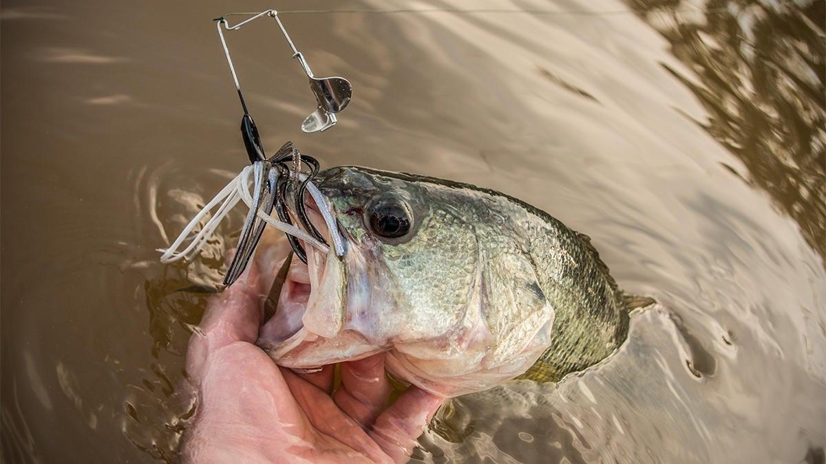 low-water-bass-fishing-3.jpg