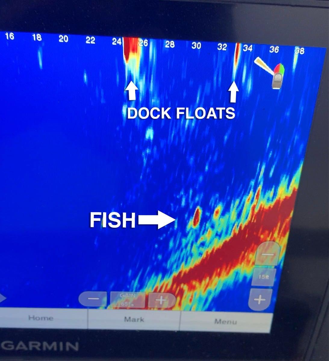 garmin-livescope-fish-under-dock.jpg