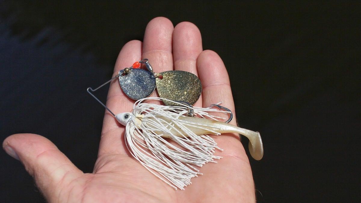fall-spinnerbait-fishing-selection-3.jpg