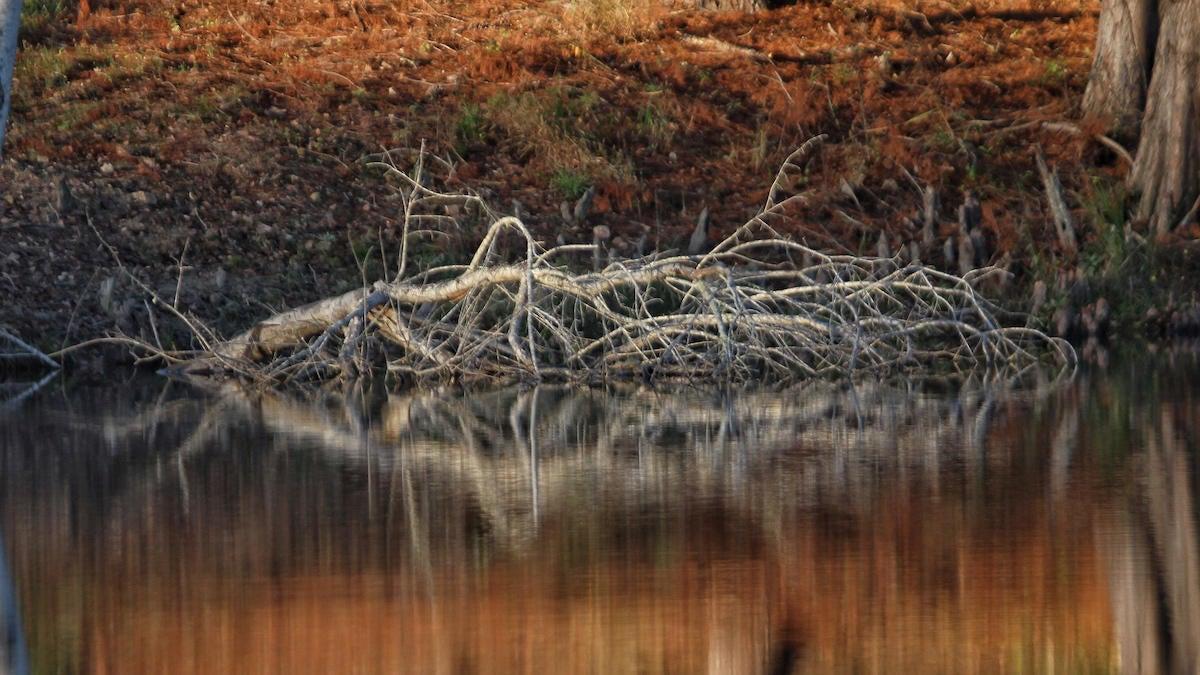 bass-fishing-trees-2.jpg