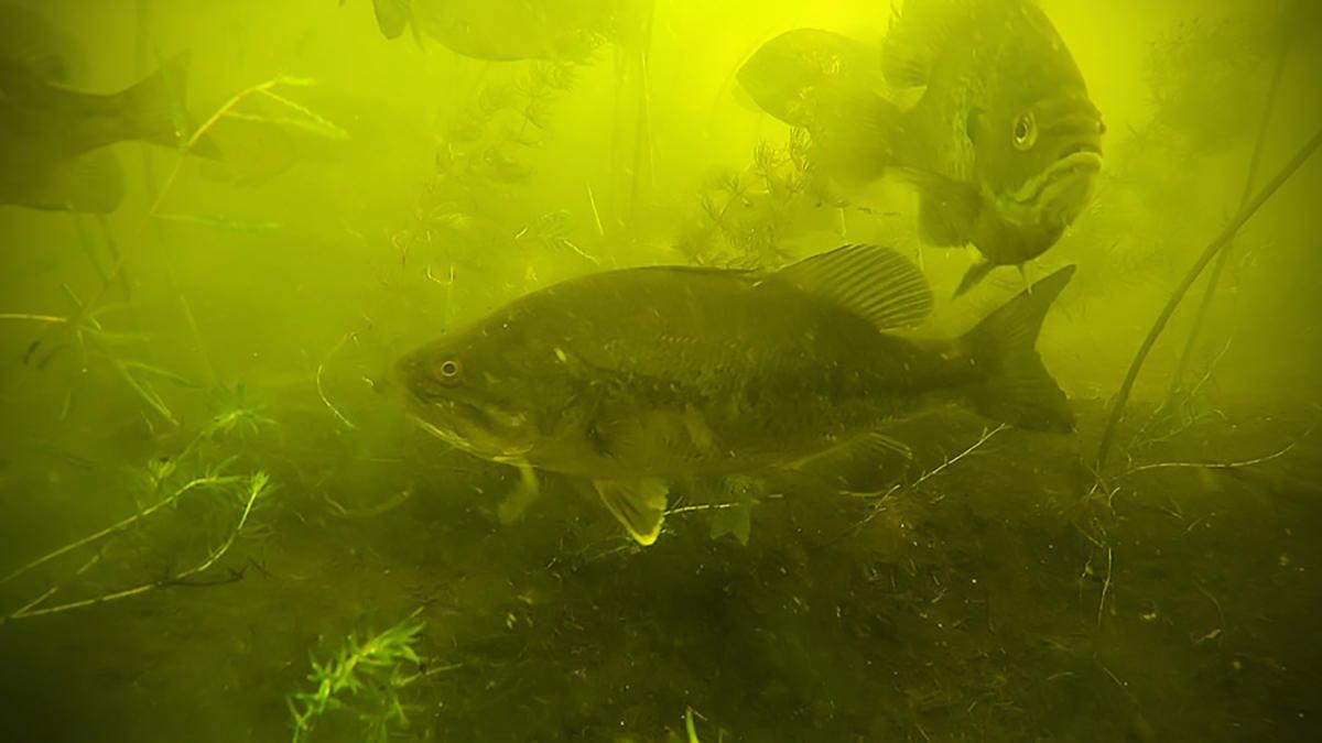 bass-fishing-truths-for-fishing-4.jpg