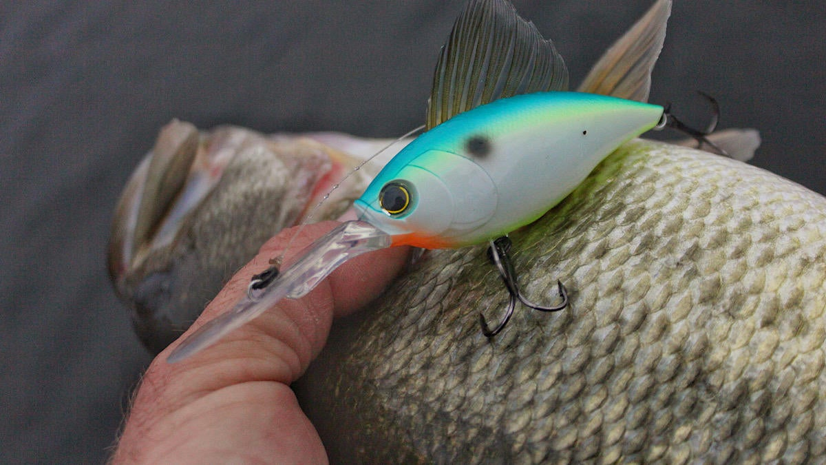 duel-hardcore-crankbait-4-crankbait-bass-fishing-lure-review-5.jpg