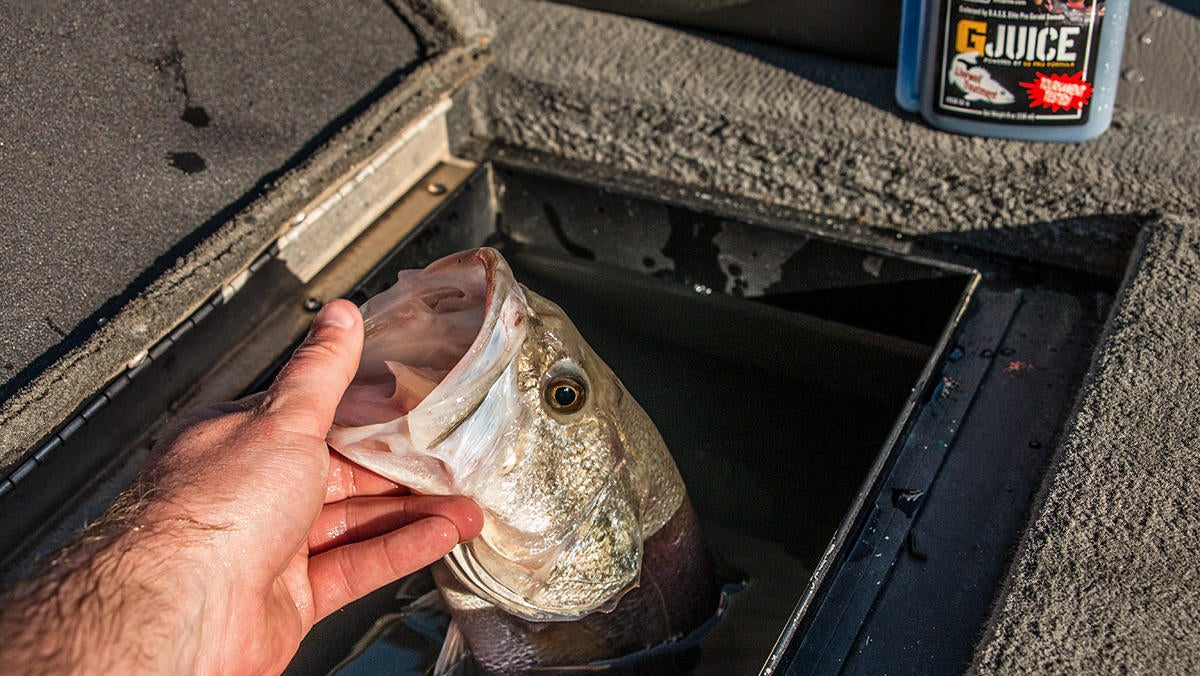 winter-bass-fishing-tips-for-co-anglers-2.jpg