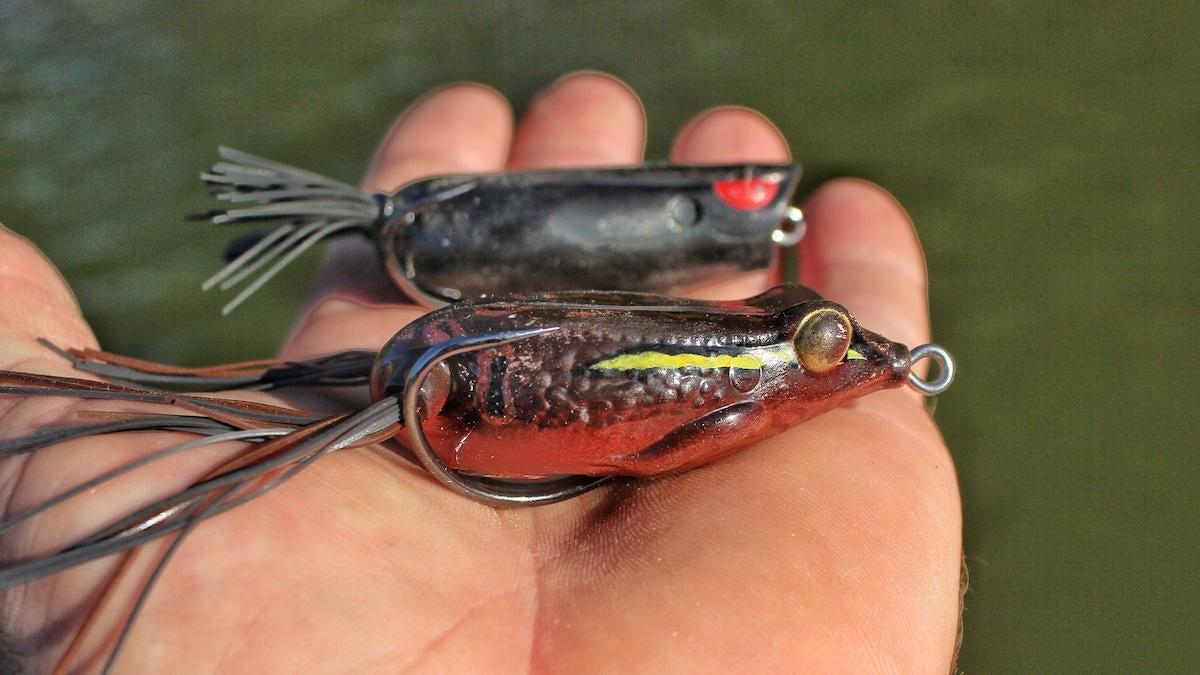 bass-fishing-frog-selection-2.jpg