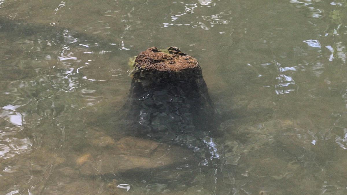 bass-fishing-stumps-3.jpg