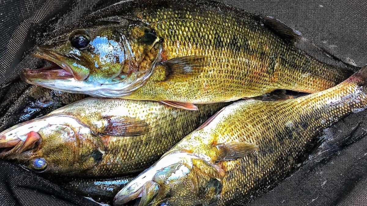 bass-fishing-stumps-4.jpg
