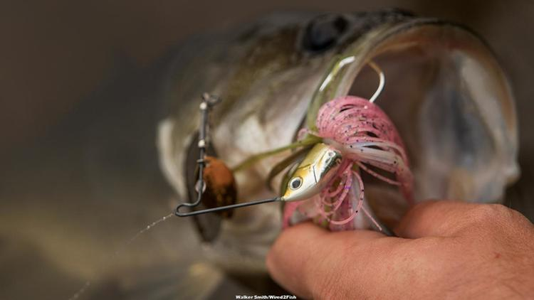 Terminator T1 Spinnerbait Review - Wired2Fish com