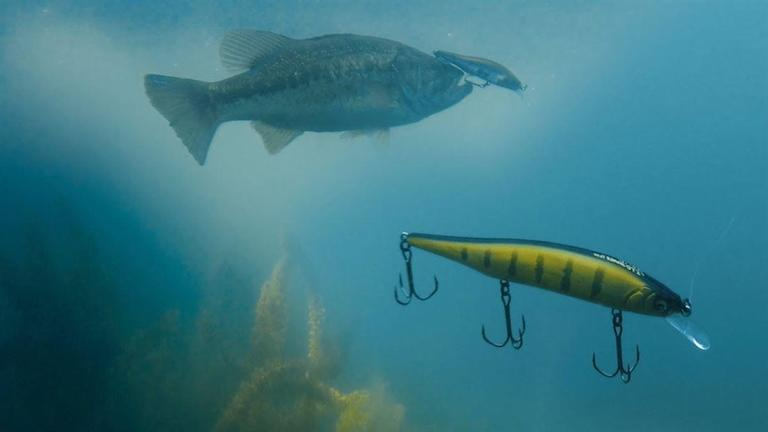 Deadly SLEEPER Megabass Jerkbaits and When They Shine