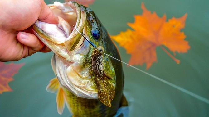 5 Soft Plastic Lures for Fall Bass Fishing - Wired2Fish com