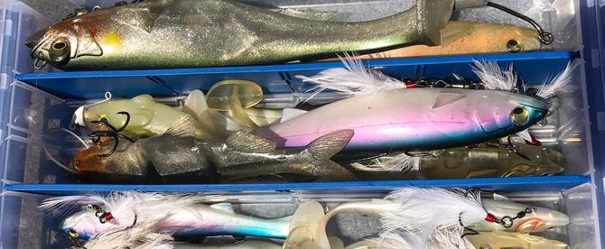 How I Store Swimbaits to Avoid Bent Tails - Wired2Fish com