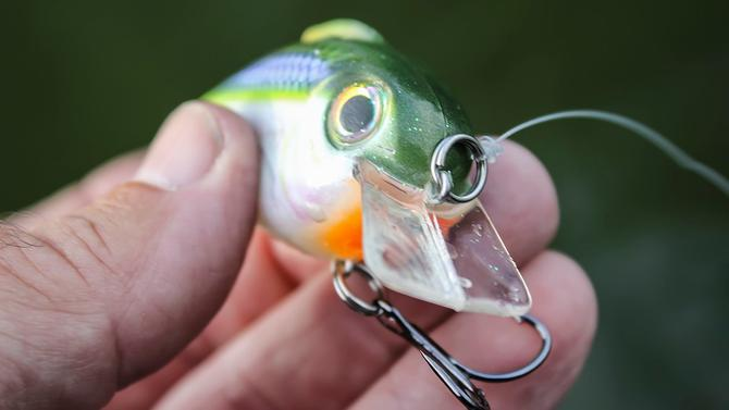 Bill Lewis Lures Echo 1 75 Crankbait Review - Wired2Fish com